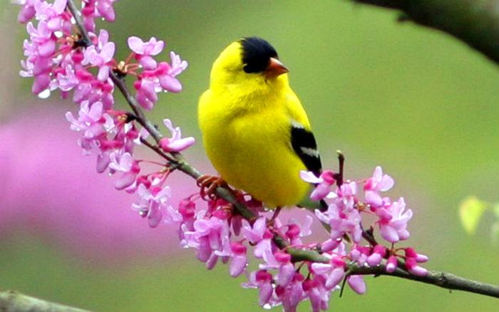 idioms-birds