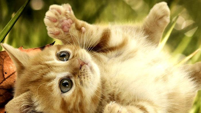 idioms-cats