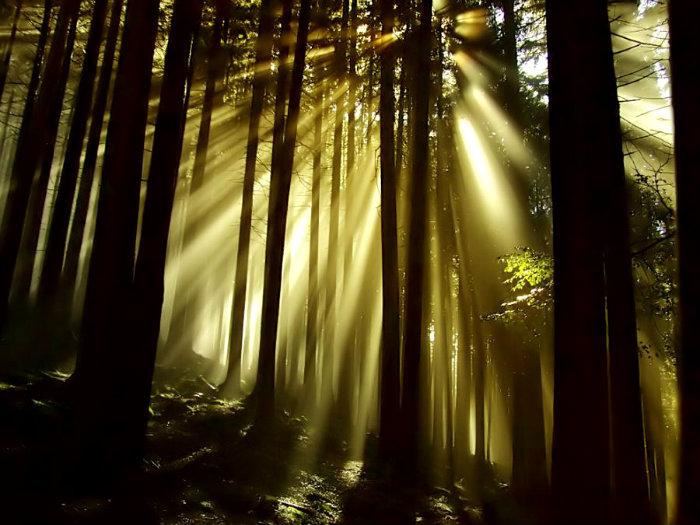 arboles-luz